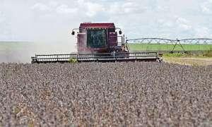 Chuva e crédito: agronegócio e comércio puxam PIB nacional