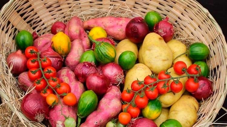Ital oferece bolsa de pós-doutorado em Processos Térmicos de Alimentos