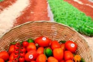 Plano ABC incentiva produção de alimentos com baixo carbono