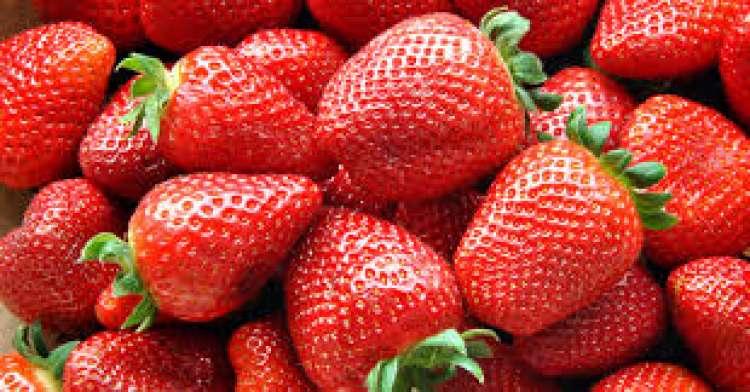 Produção integrada de morango reduz uso de químicos