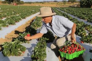 Rastreabilidade de vegetais começa a ser implementada