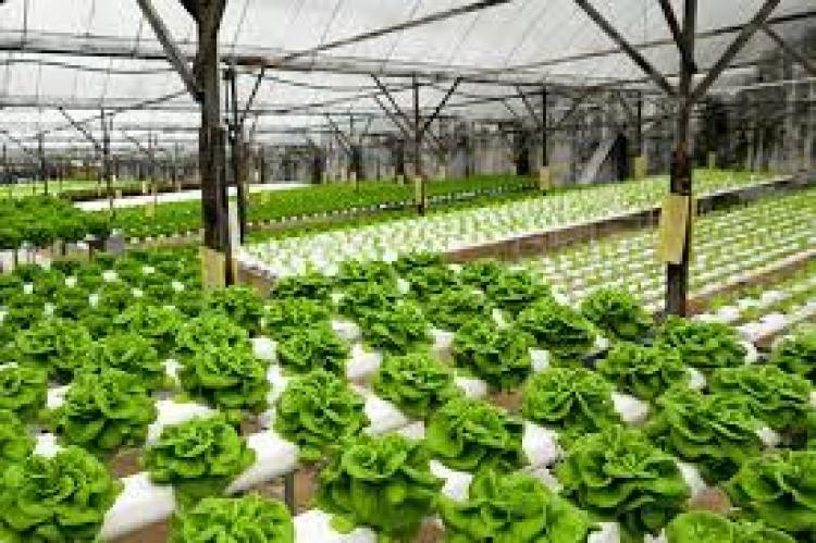 Cultivo hidropônico pode acabar com a fome