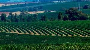 Agricultura sustentável: multinacionais com receita de U$$ 500 bilhões se unem para promover a biodiversidade