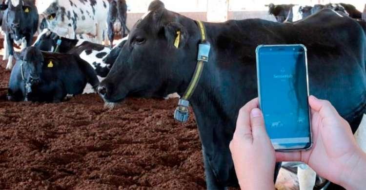 Sistema de identificação e monitoramento de animais, triplica taxa de prenhez de vacas