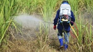 Bayer lança herbicida para cana com promessa de redução no repasse