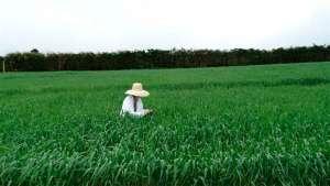 Engenheiros Agrônomos contribuem para desenvolver o agro