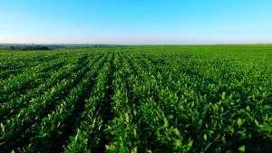 Produtores contrataram R$ 108,5 bilhões nos primeiros seis meses da atual safra para financiar agricultura