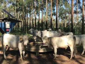 Com fórmula simples, produtor pode calcular consumo de água por animais