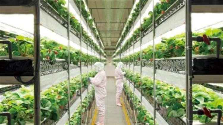 Agricultura vertical pode ser a solução para a produtividade