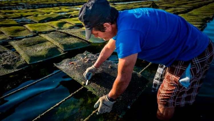 A Aquicultura como alternativa na oferta de pescado