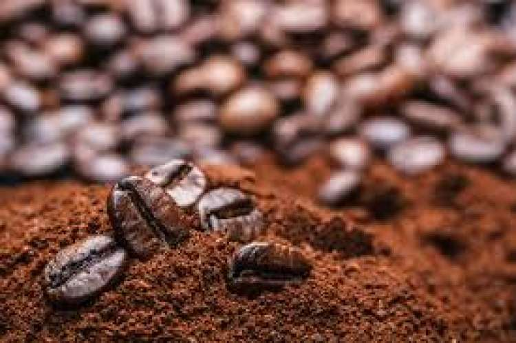 Safra de café deve ter preços próximos da anterior até fim da colheita, diz Cepea
