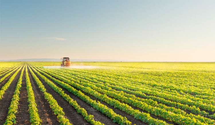 Meio ambiente: projeto prevê dispensa de licença para atividades do agro