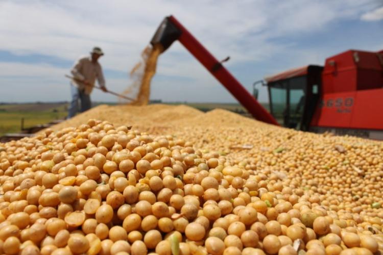 CSFI Brasil tem parceria com Canadá e EUA em minor crops