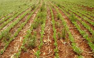 Pré-emergente é uma das alternativas para manejo de plantas daninhas resistentes