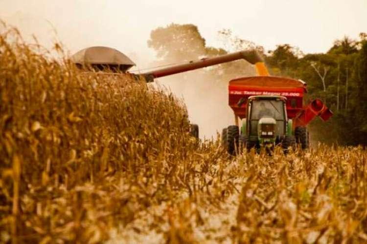 IGC aumenta estimativa da produção global de grãos da temporada 2019/20 para 2.162 bilhões de toneladas