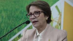 Governo terá R$ 10 bilhões para equalizar taxas no Plano Safra, diz ministra