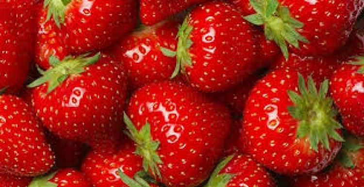 TOP 10 das melhores variedades de morangos reparadoras