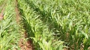 Preços da terra brasileira refletem uso agrícola