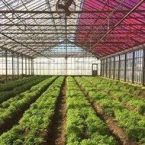 Insetos benéficos podem ser úteis para plantações em estufa