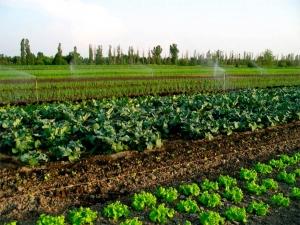 As estratégias do mercado de hortaliças