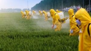 EUA considera limitar regulamentações de pesticidas