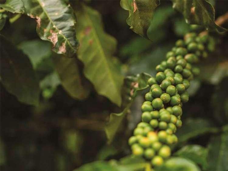SIC: Fórum debate sustentabilidade social, ambiental e econômica na cafeicultura