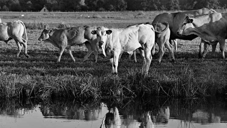 Justificativas para investir no agronegócio brasileiro