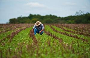 Jovens se qualificam para atuar em novos ramos da agropecuária